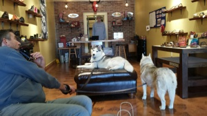 Secret (on ottoman) and Fiona makes themselves at home at the Doc Shop.