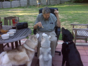 Man feeding biscuits to three seated dogs