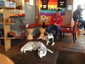 two siberian huskies with man in cyber cafe