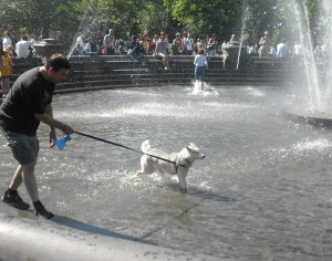 Siberian Husky in Fountain