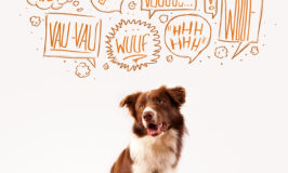 Do You Speak Woof? Learn the Meaning of Your Dog's Bark