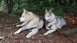 Fiona and Lobo in woods