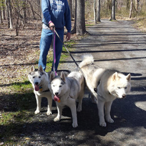 pack on the manasquan trail